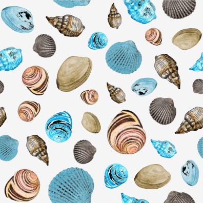 Shells on white