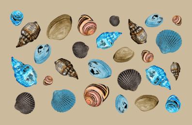 shells for summer