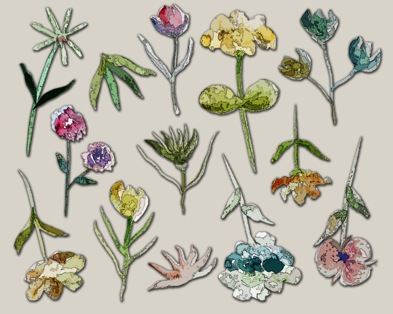 Wild flowers placemats